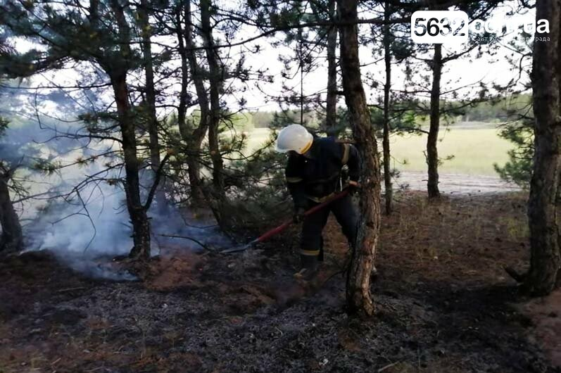 В Павлограде горел сосновый лес, фото-1