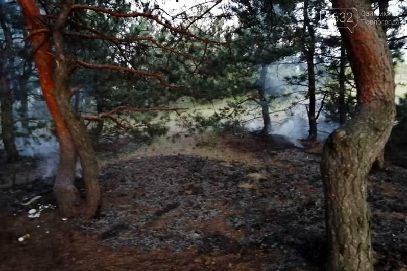 В Павлограде горел сосновый лес, фото-2
