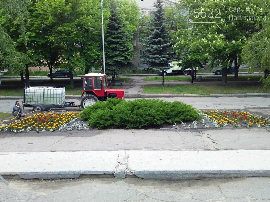В микрорайоне Шахтостроителей появились яркие цветочные клумбы (ФОТОФАКТ), фото-4