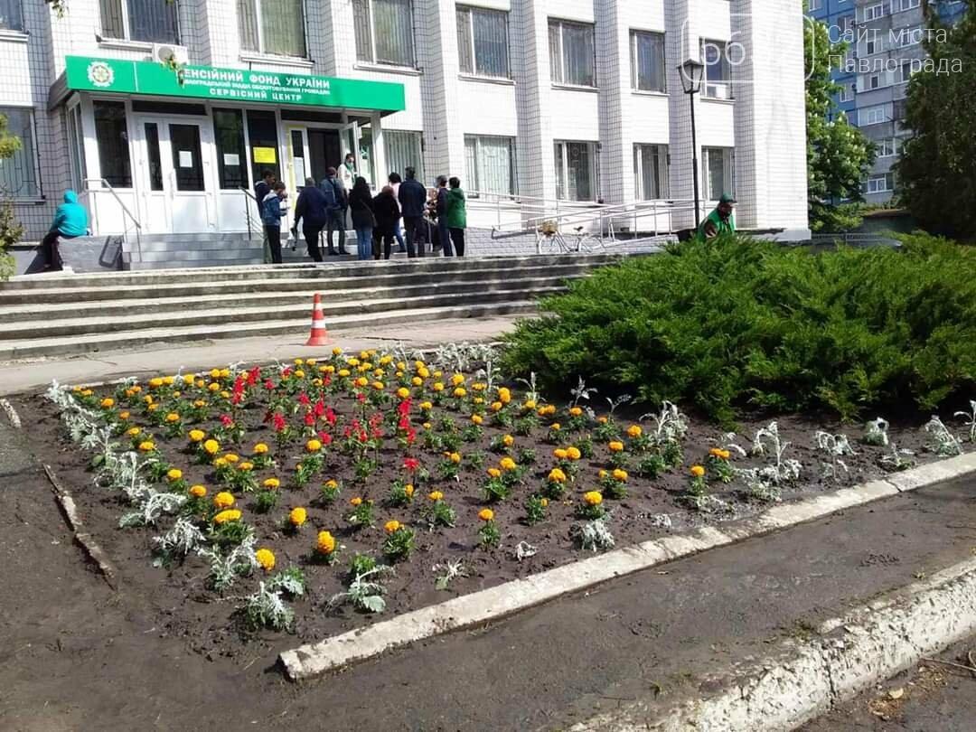 В микрорайоне Шахтостроителей появились яркие цветочные клумбы (ФОТОФАКТ), фото-3