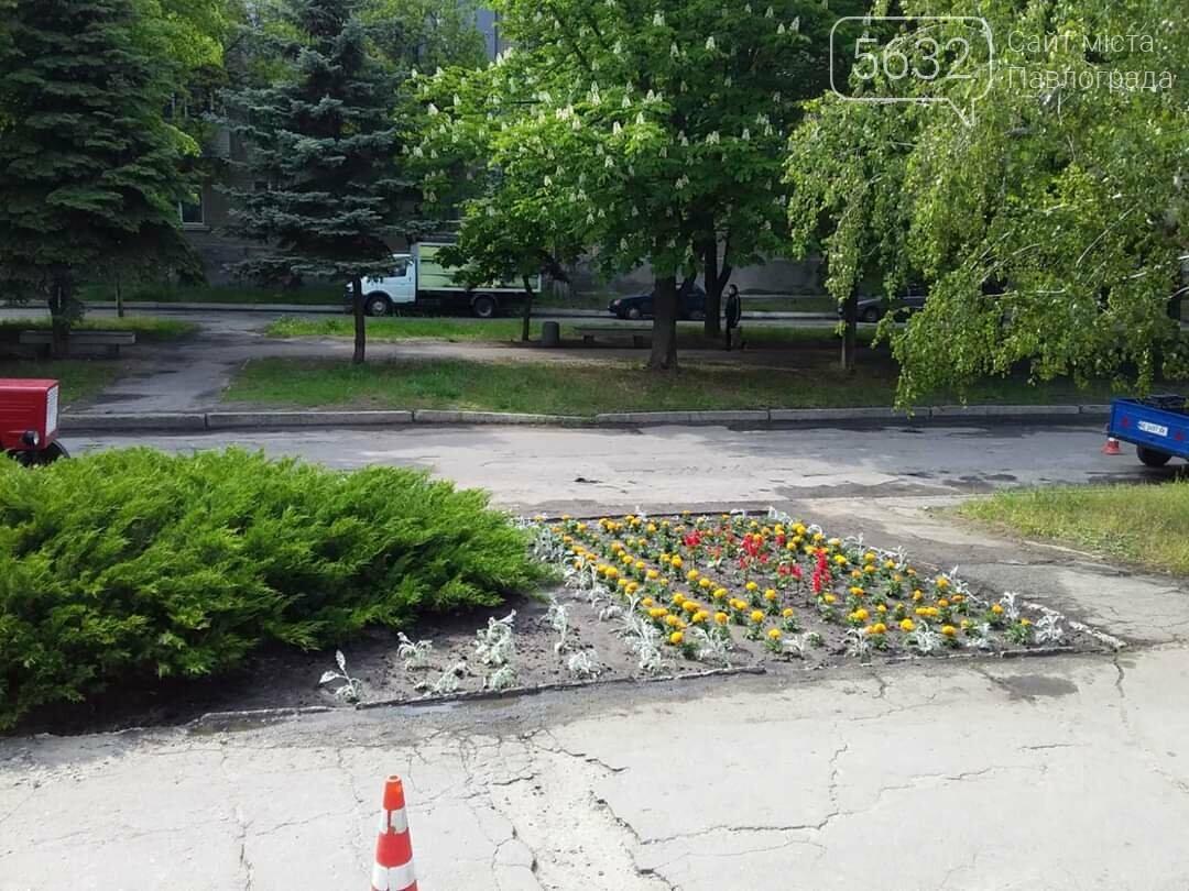 В микрорайоне Шахтостроителей появились яркие цветочные клумбы (ФОТОФАКТ), фото-5