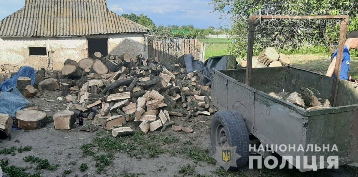 Павлоградские полицейские обнаружили незаконную вырубку леса на окраине с. Межирич, фото-1