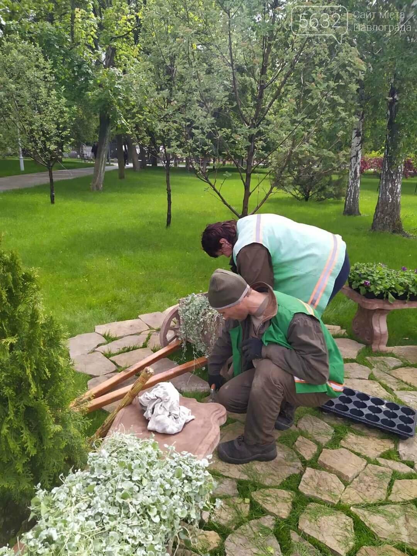 Центр Павлограда пополнился новой оригинальной цветочной композицией (ФОТОФАКТ), фото-7
