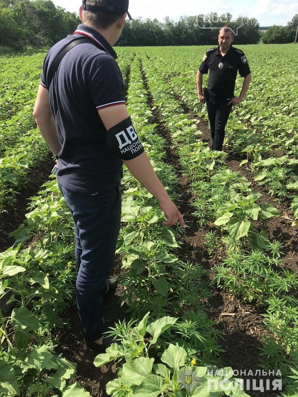 В селе Кочережки Павлоградского района обнаружили целое поле с коноплёй, фото-1