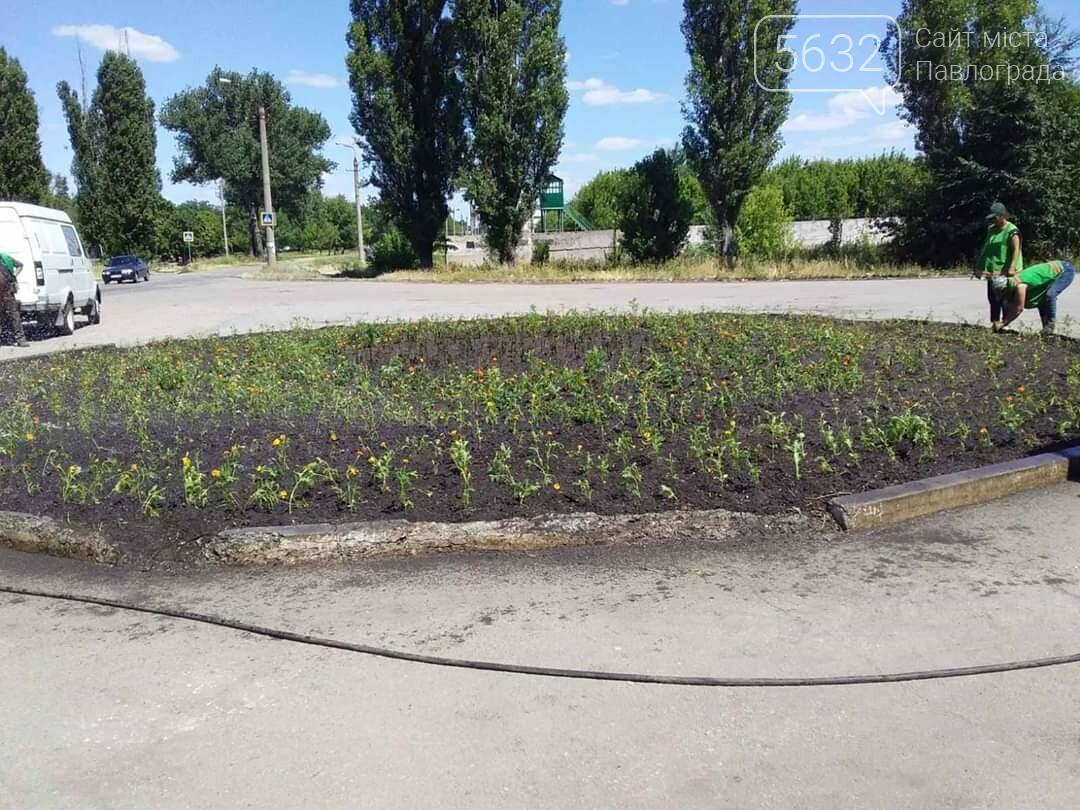 В Павлограде появилась новая цветочная клумба (ФОТОФАКТ), фото-4