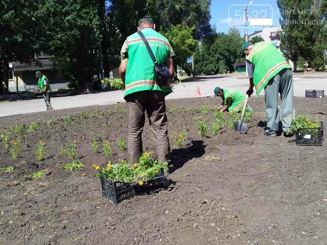 В Павлограде появилась новая цветочная клумба (ФОТОФАКТ), фото-2