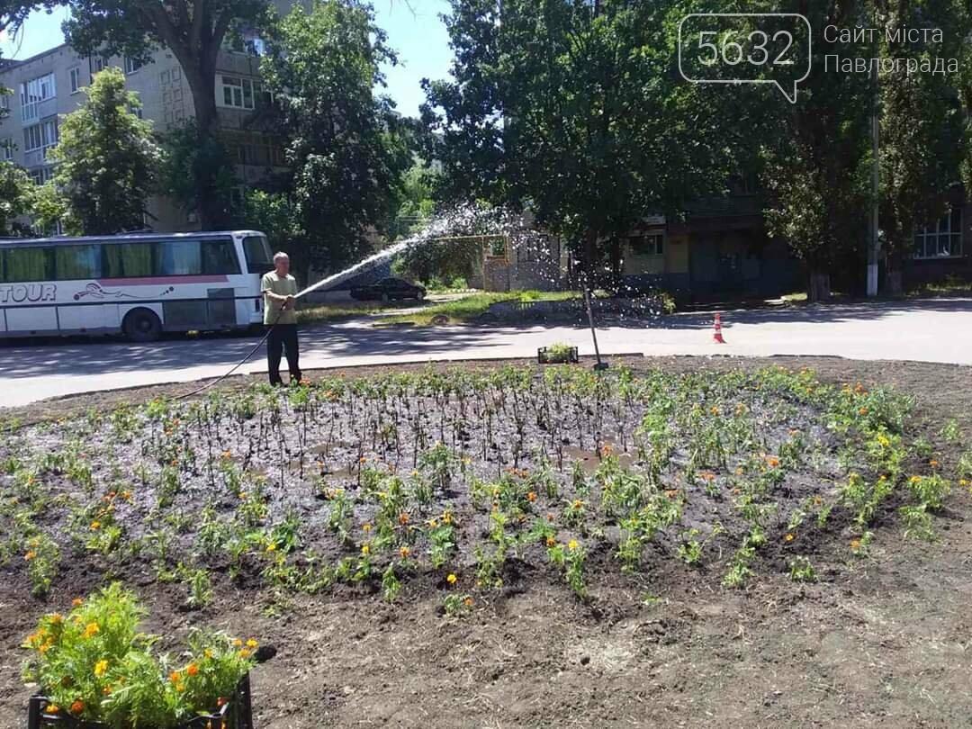 В Павлограде появилась новая цветочная клумба (ФОТОФАКТ), фото-6