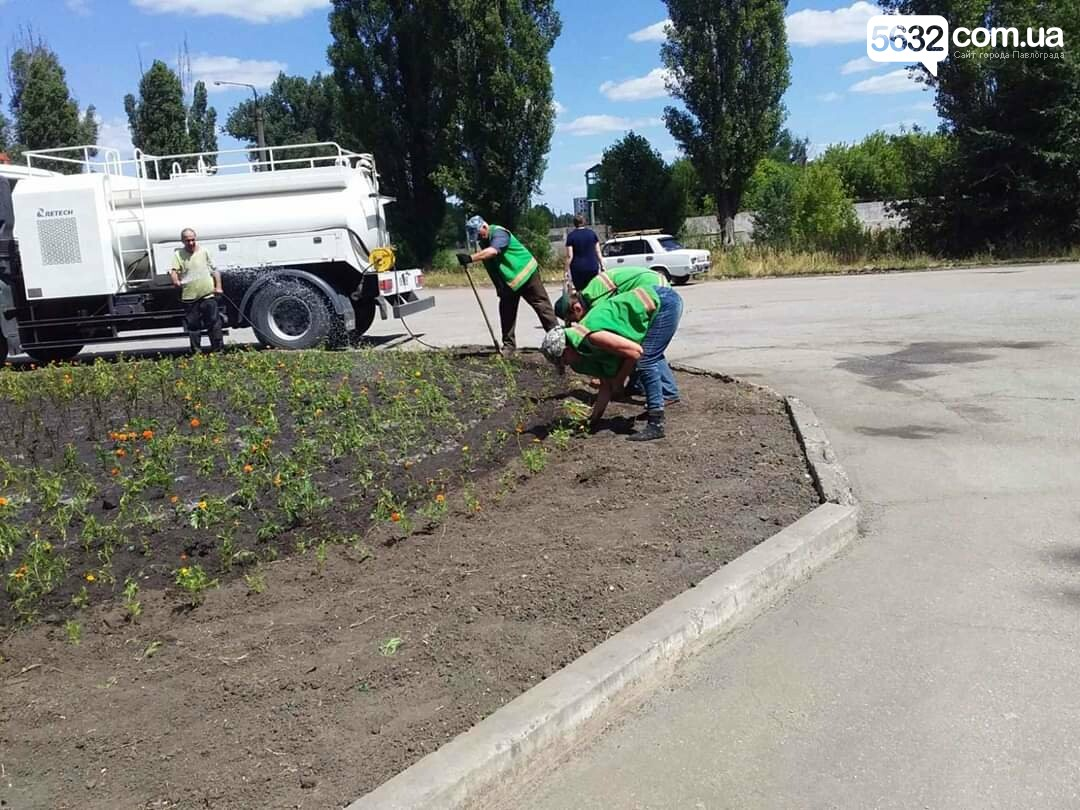 В Павлограде появилась новая цветочная клумба (ФОТОФАКТ), фото-3