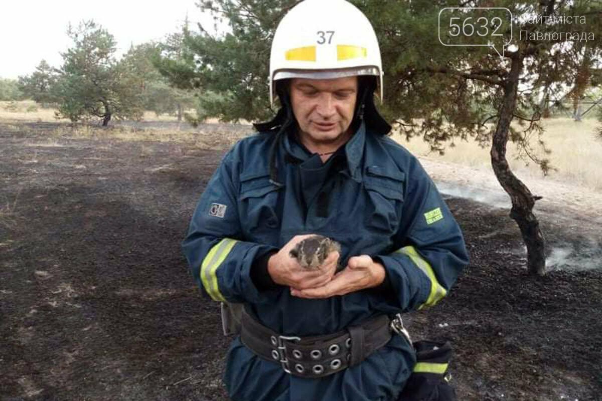 В Павлограде во время ликвидации пожара спасли зайчонка, фото-1