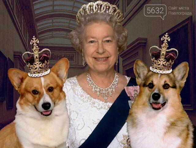 Павлоградцев приглашают познакомиться с королевскими собаками, фото-2