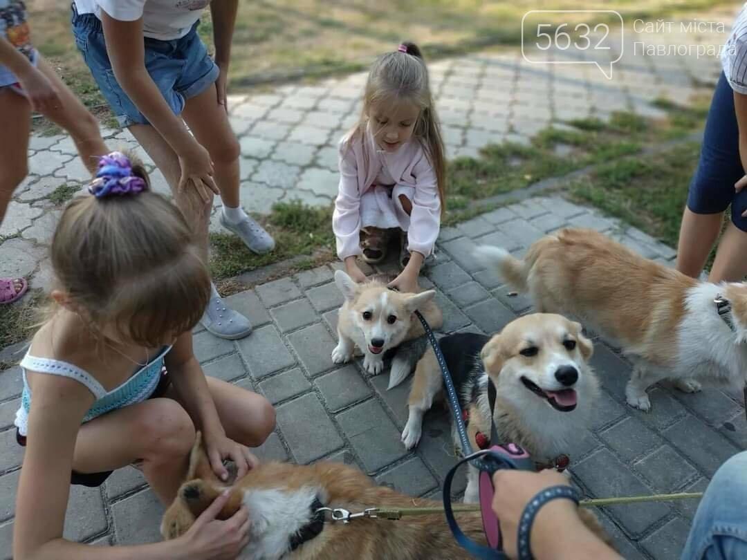 Павлоградцев приглашают познакомиться с королевскими собаками, фото-1