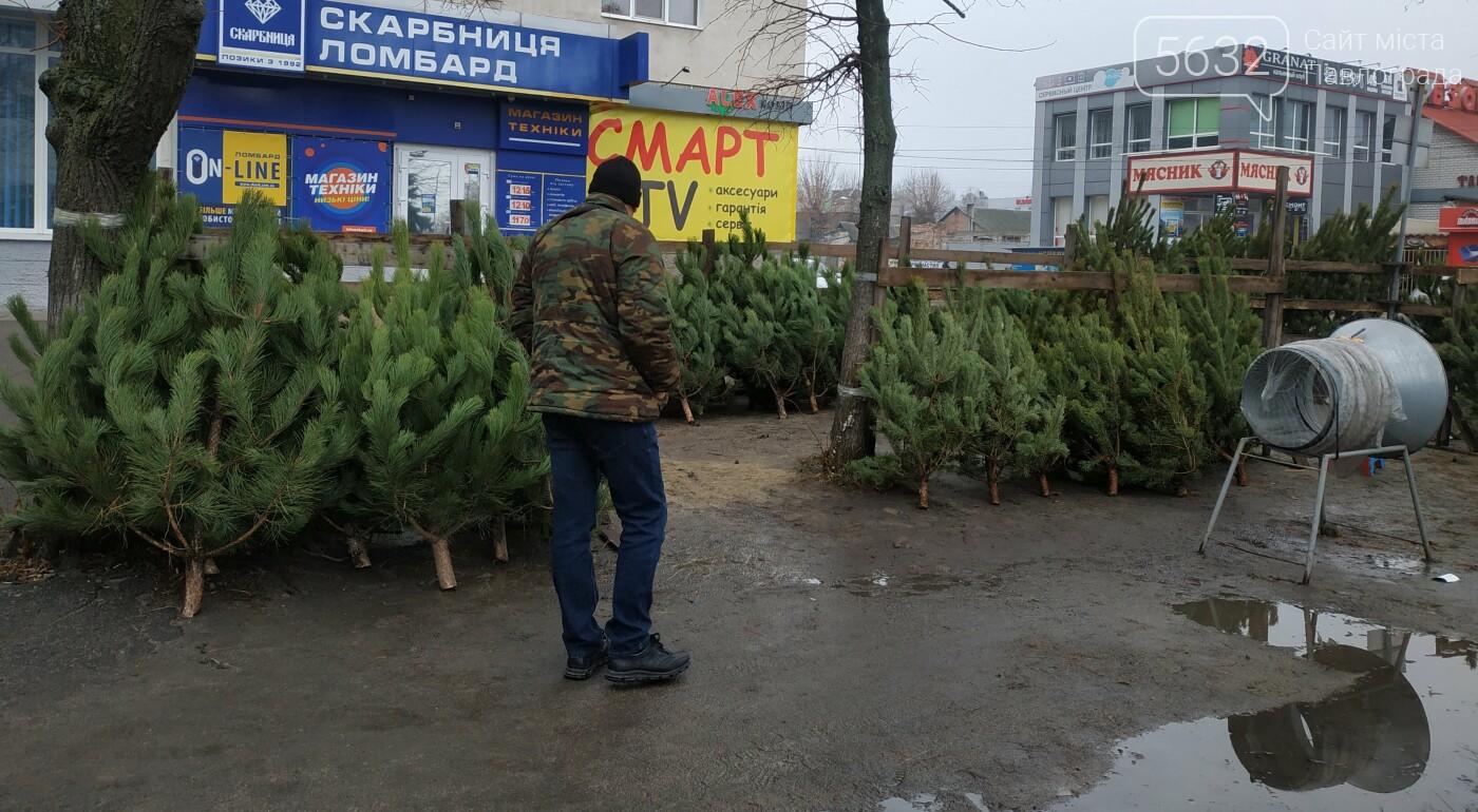 В центре Павлограда открылся ёлочный базар: сколько будет стоить лесная красавица?, фото-3