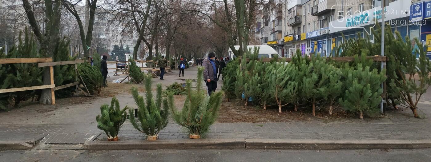 В центре Павлограда открылся ёлочный базар: сколько будет стоить лесная красавица?, фото-10