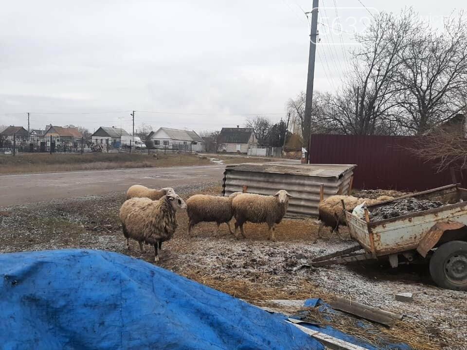 Павлоградец выпасал овец прямо на кладбище (ФОТО), фото-5