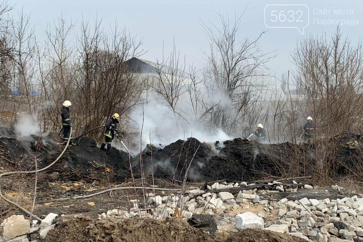 В Павлограде горела сухая трава и камыш, фото-1