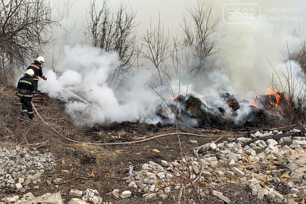 В Павлограде горела сухая трава и камыш, фото-2