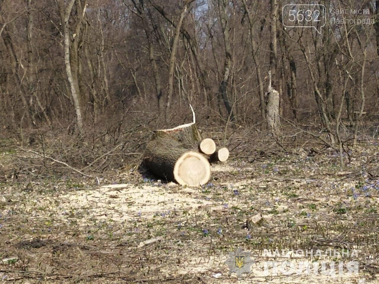 В Павлоградском районе полицейские задержали группу «чёрных лесорубов» (ФОТО, ВИДЕО), фото-3