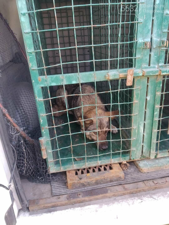 В Павлограде спасли дворняжку, упавшую в 3-метровый колодец, фото-2