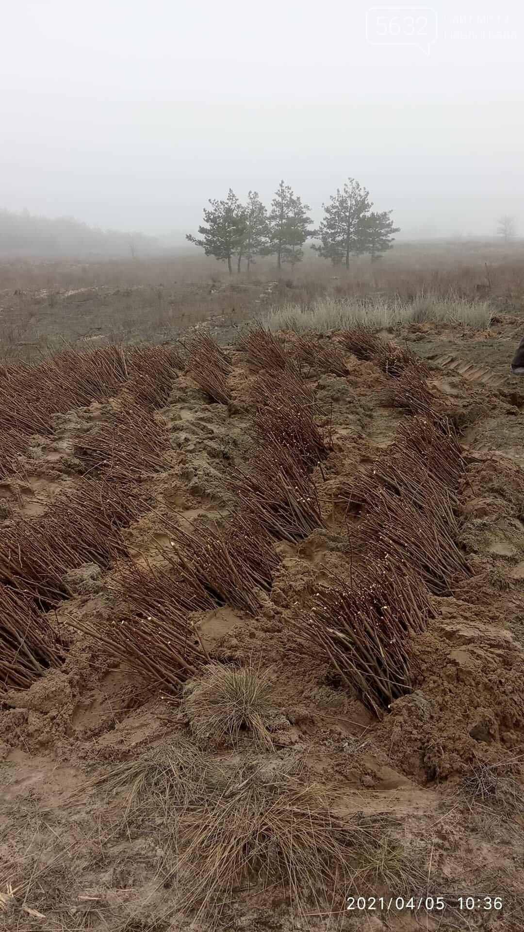 На месте сгоревшего леса на Бельбесе высаживают новые деревья (ФОТО), фото-6