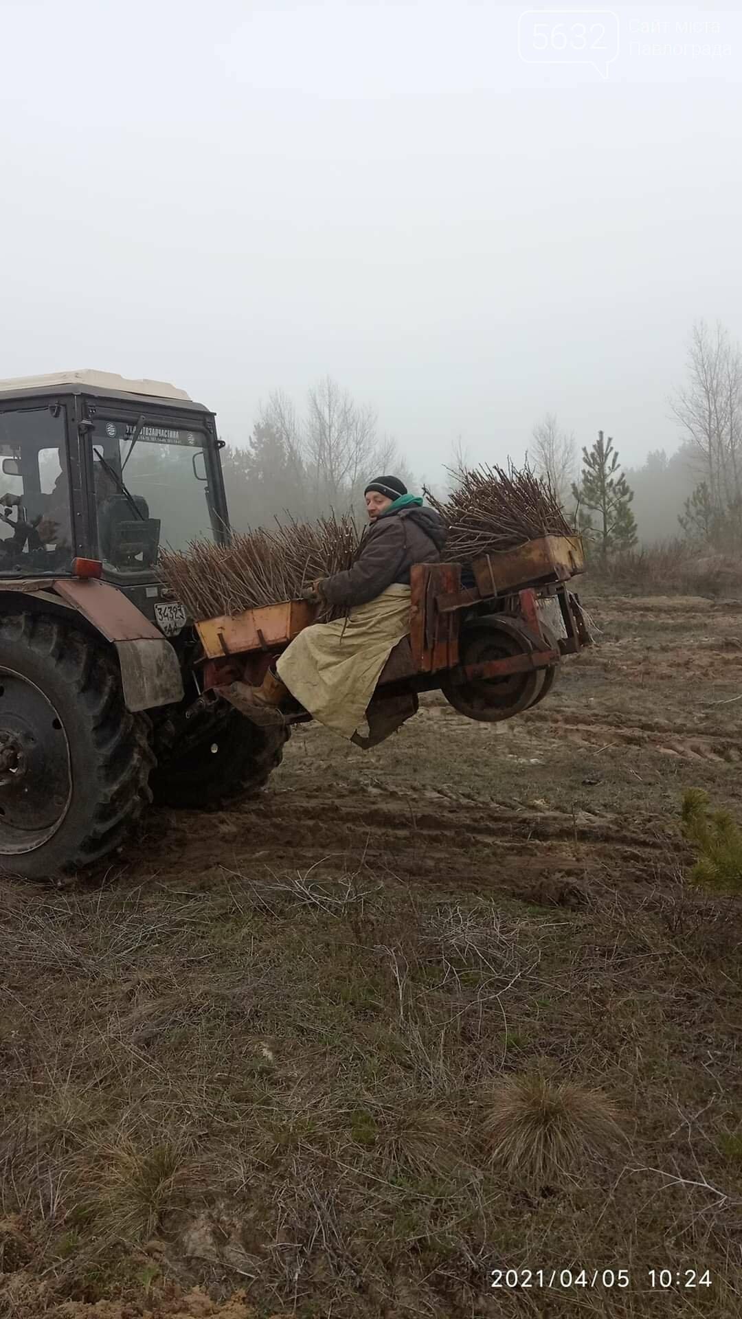 На месте сгоревшего леса на Бельбесе высаживают новые деревья (ФОТО), фото-2
