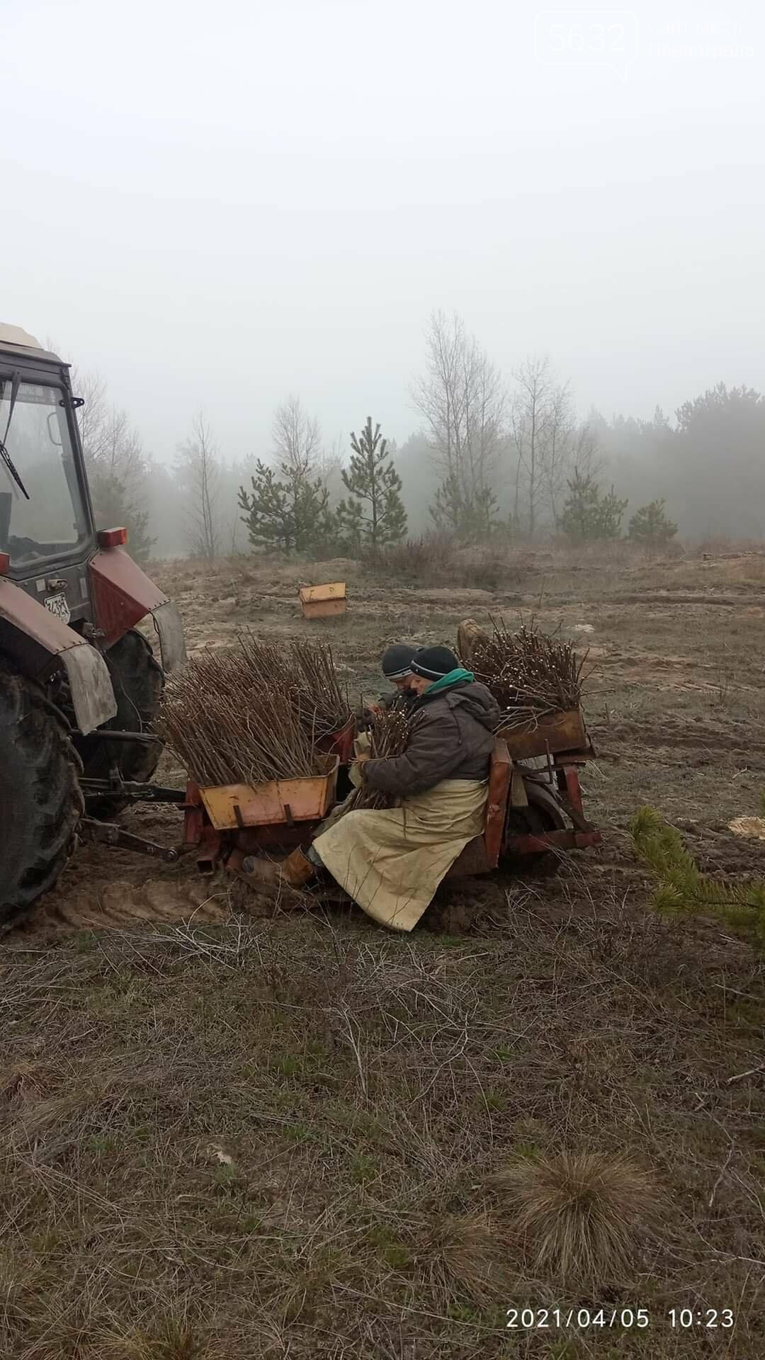 На месте сгоревшего леса на Бельбесе высаживают новые деревья (ФОТО), фото-1