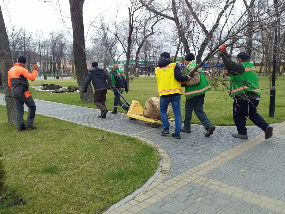 В центре Павлограда высаживают молодые деревья (ФОТО), фото-2