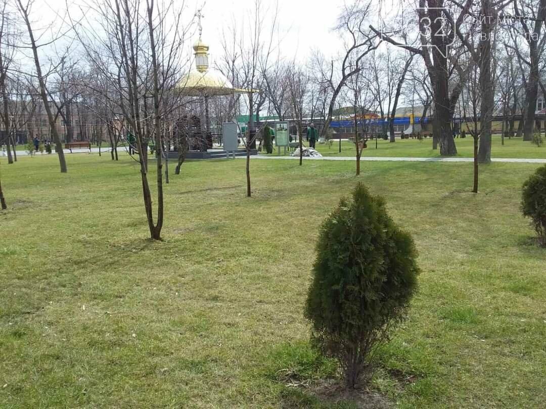 В центре Павлограда высаживают молодые деревья (ФОТО), фото-6