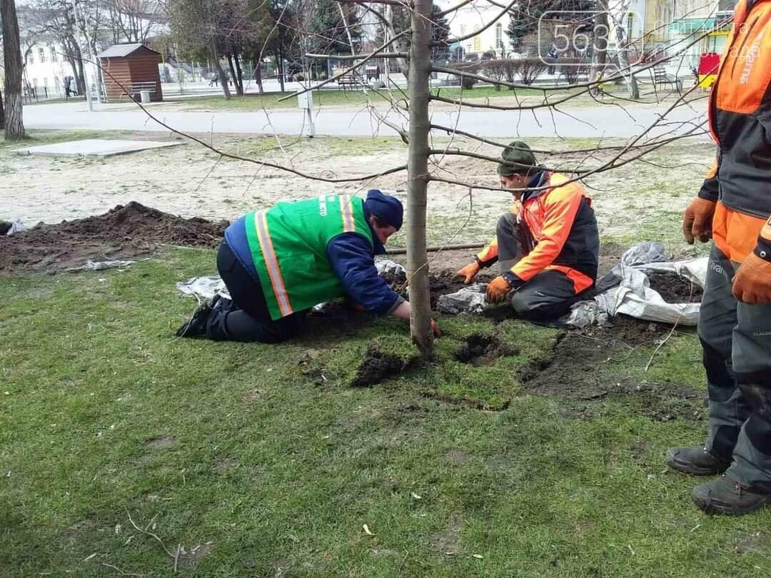 В центре Павлограда высаживают молодые деревья (ФОТО), фото-5