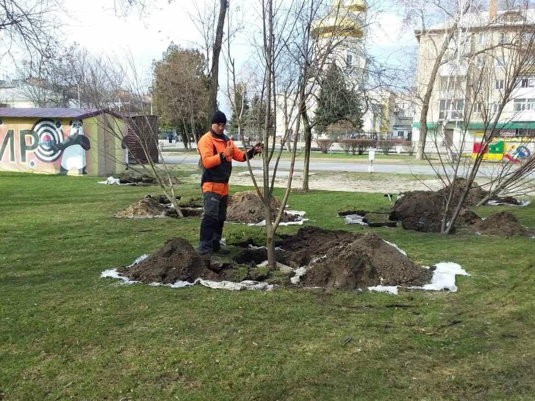 В центре Павлограда высаживают молодые деревья (ФОТО), фото-4