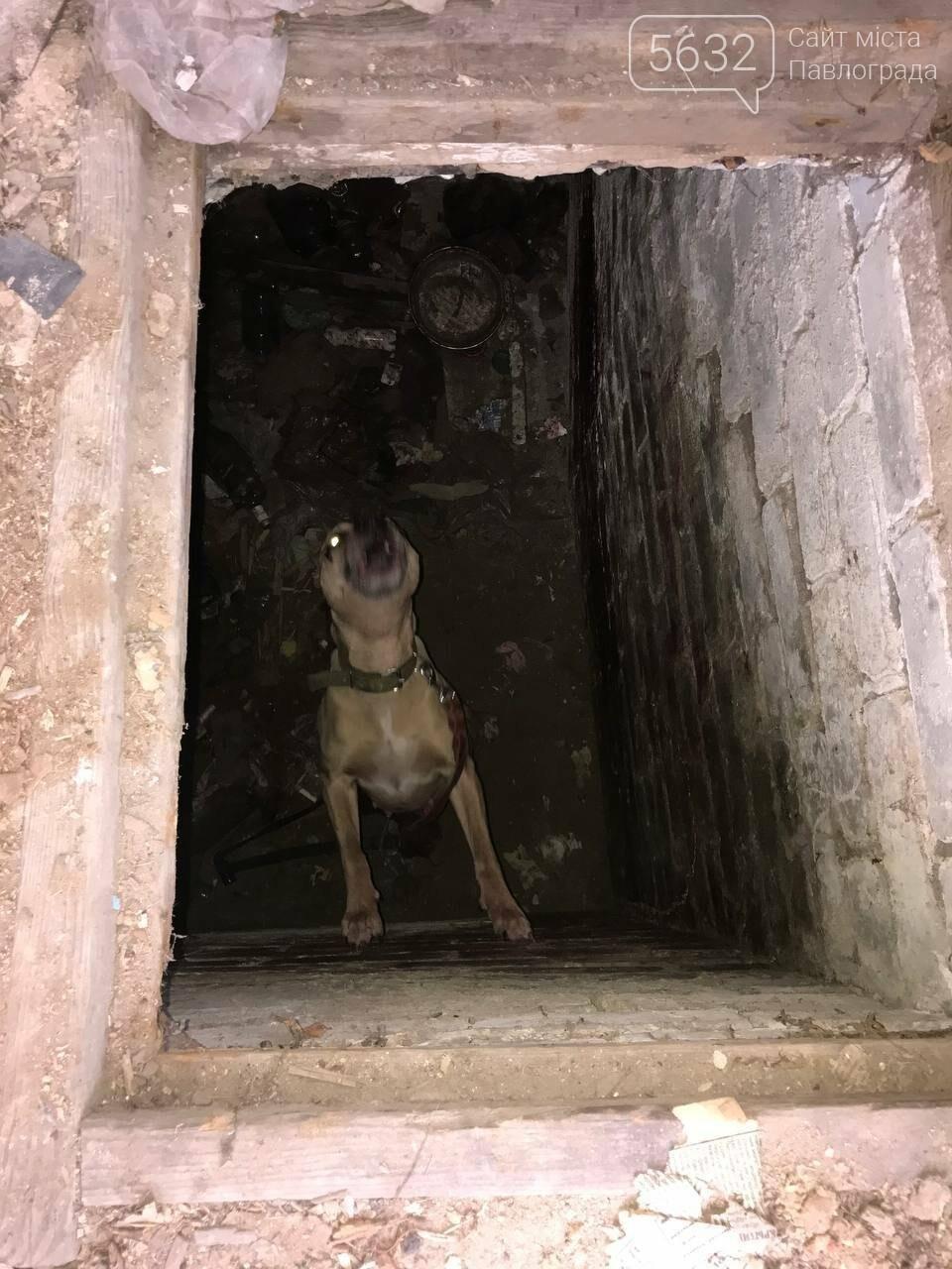 В Павлограде спасли собаку, которую держал в подвальном помещении нерадивый хозяин, фото-4