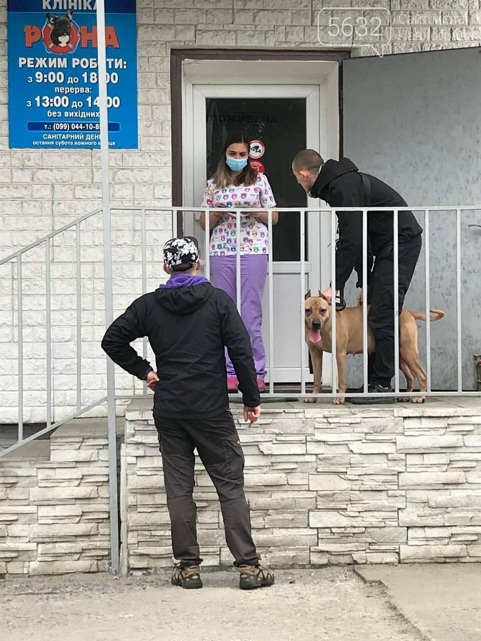 В Павлограде спасли собаку, которую держал в подвальном помещении нерадивый хозяин, фото-5