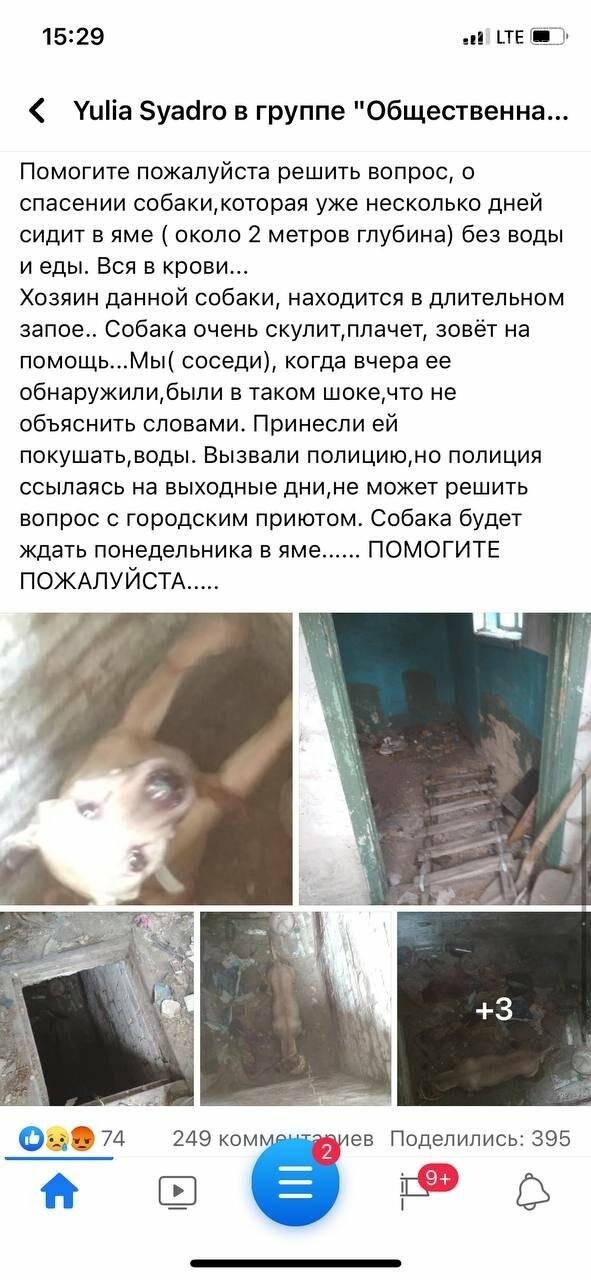 В Павлограде спасли собаку, которую держал в подвальном помещении нерадивый хозяин, фото-1