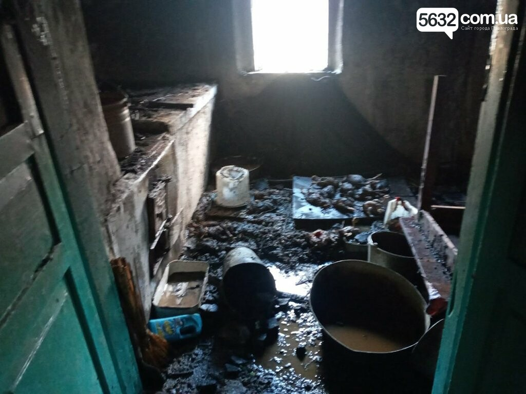 На пожаре в селе Дмитровка погибли 80 цыплят, фото-3