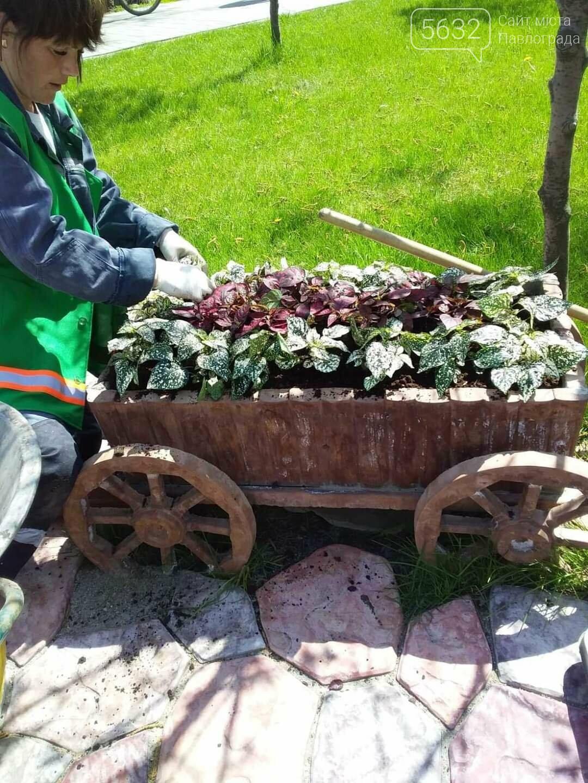 Для свадебных фотосессий в Павлограде готовят новую цветочную локацию в центре города, фото-11