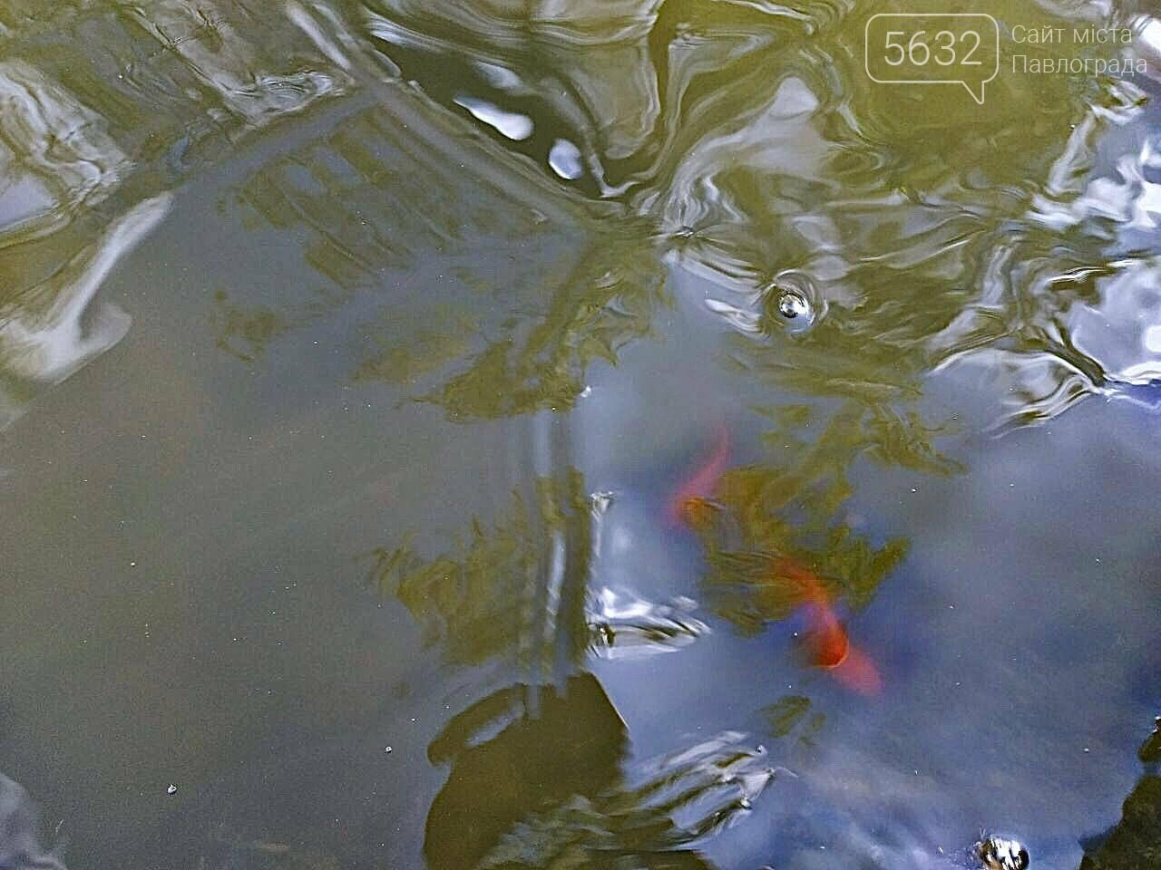 В Детском парке Павлограда включили фонтан и запустили в него рыбок (ФОТОФАКТ), фото-4