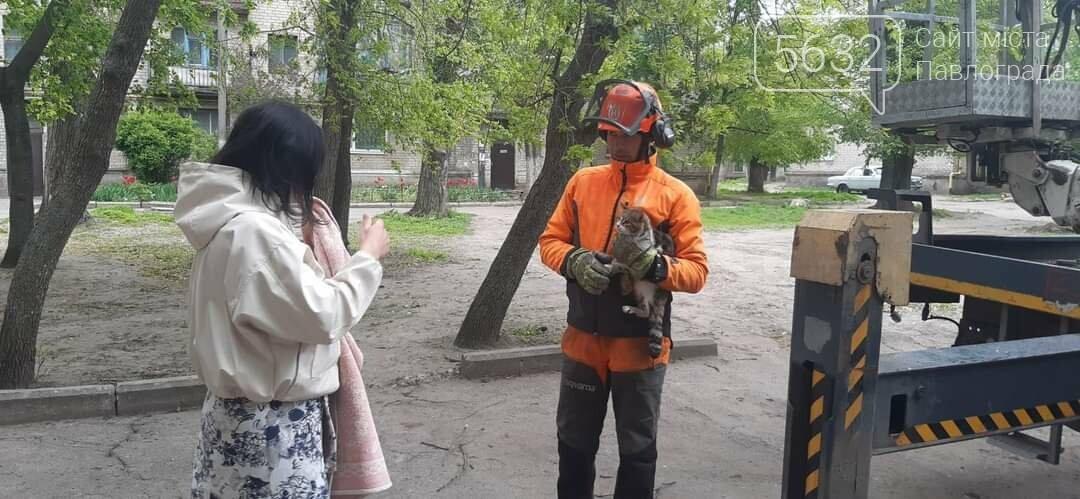 Спасение пушистика: в Павлограде сняли кота с высокого каштана (ФОТО), фото-3