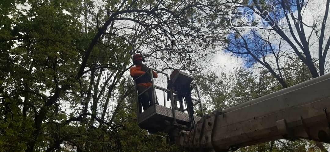 Спасение пушистика: в Павлограде сняли кота с высокого каштана (ФОТО), фото-2