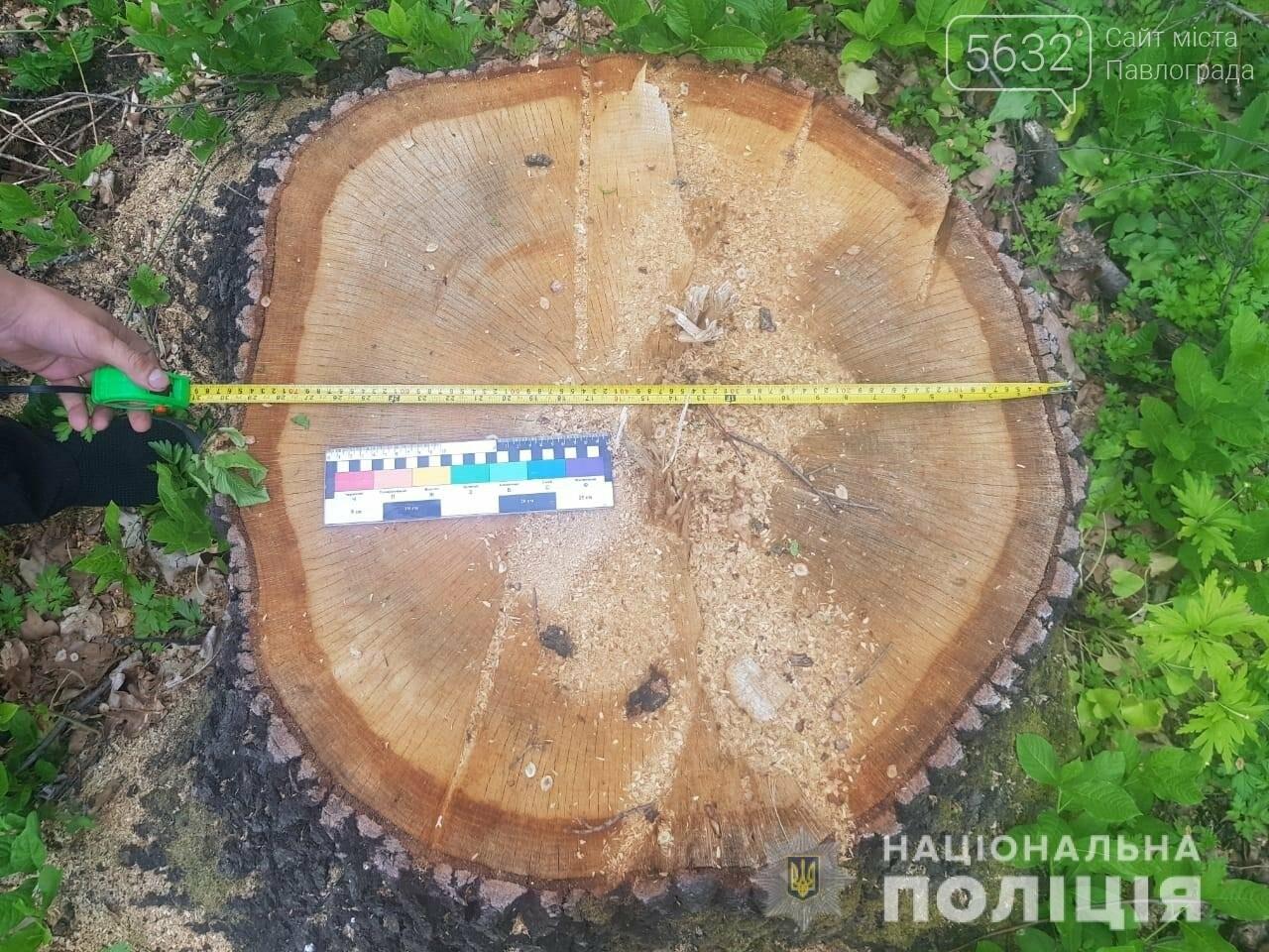 На Днепропетровщине задержали банду «черных лесорубов», фото-4