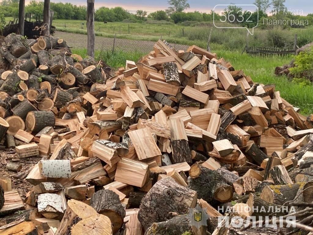 На Днепропетровщине задержали банду «черных лесорубов», фото-3