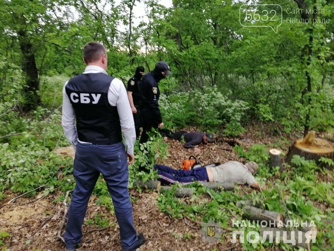 На Днепропетровщине задержали банду «черных лесорубов», фото-1
