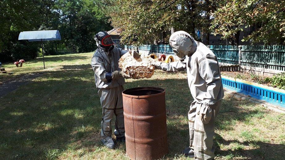 У дитячому садку на Дніпропетровщині знайшли гніздо шершнів, фото-2