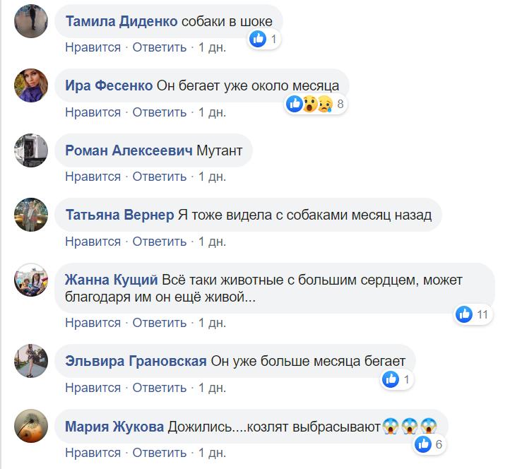По центру Павлограда бегает стая собак во главе с козлёнком  , фото-6