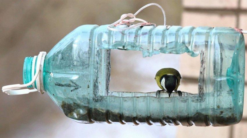 Как помочь пернатым Павлограда пережить холода?, фото-6