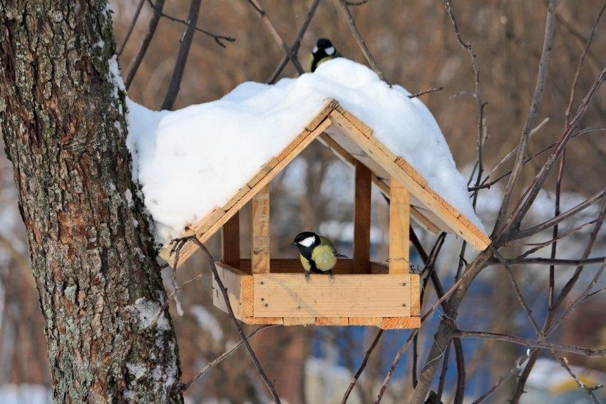 Как помочь пернатым Павлограда пережить холода?, фото-3