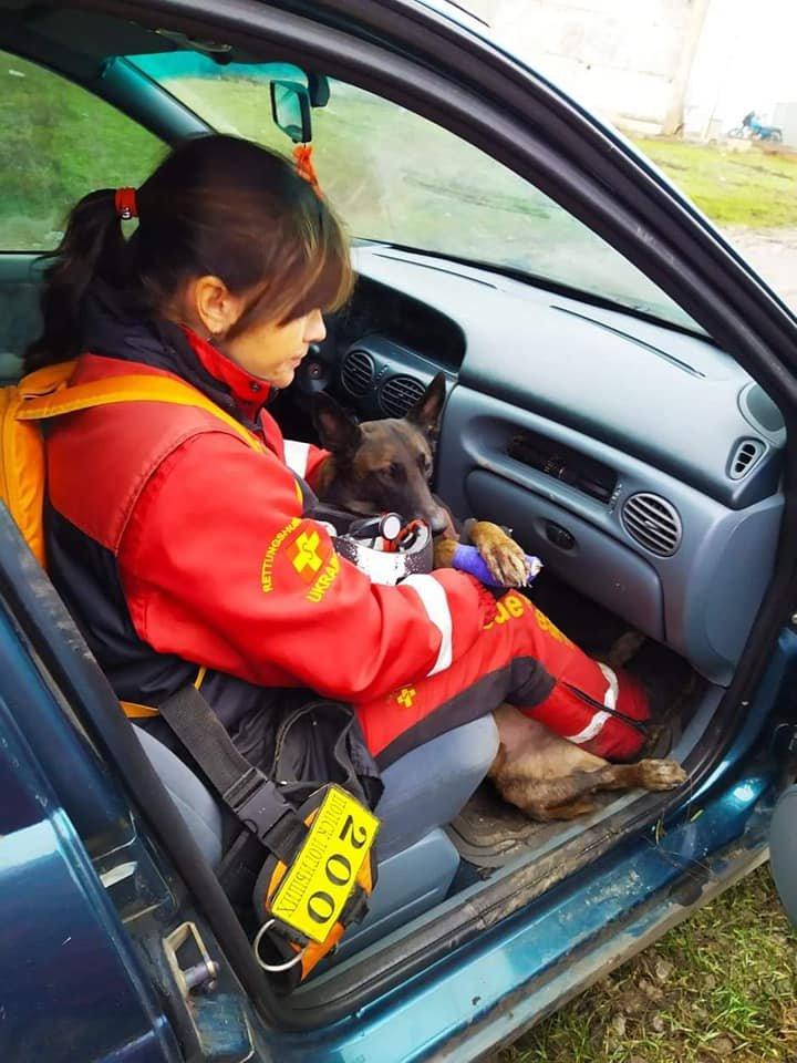 Уникальный пёс-поисковик из Павлограда получил серьёзную травму , фото-2