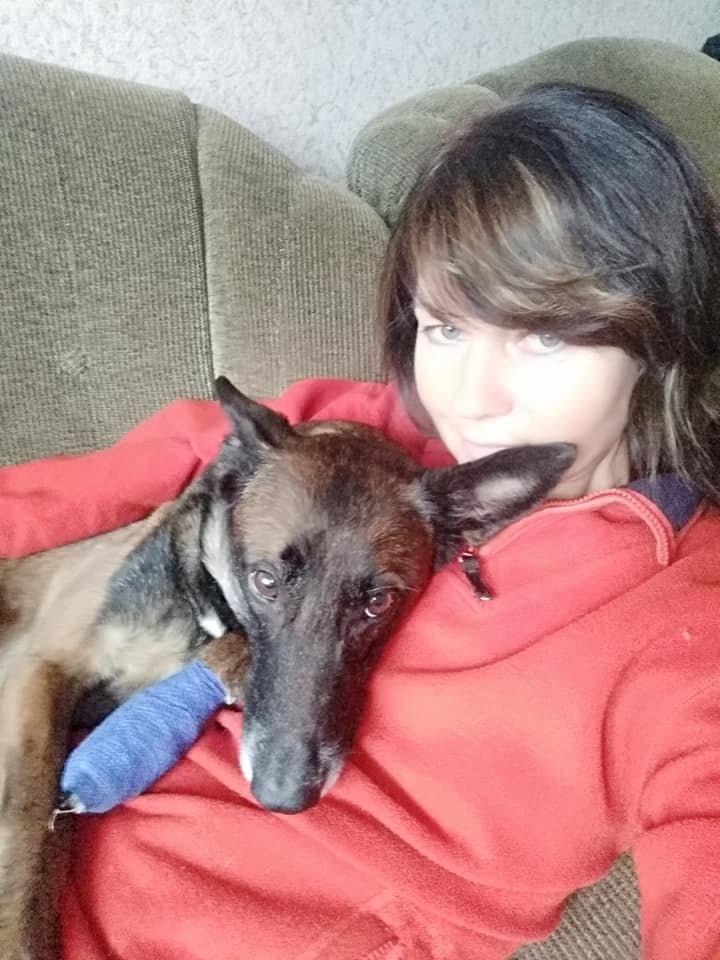 Уникальный пёс-поисковик из Павлограда получил серьёзную травму , фото-1
