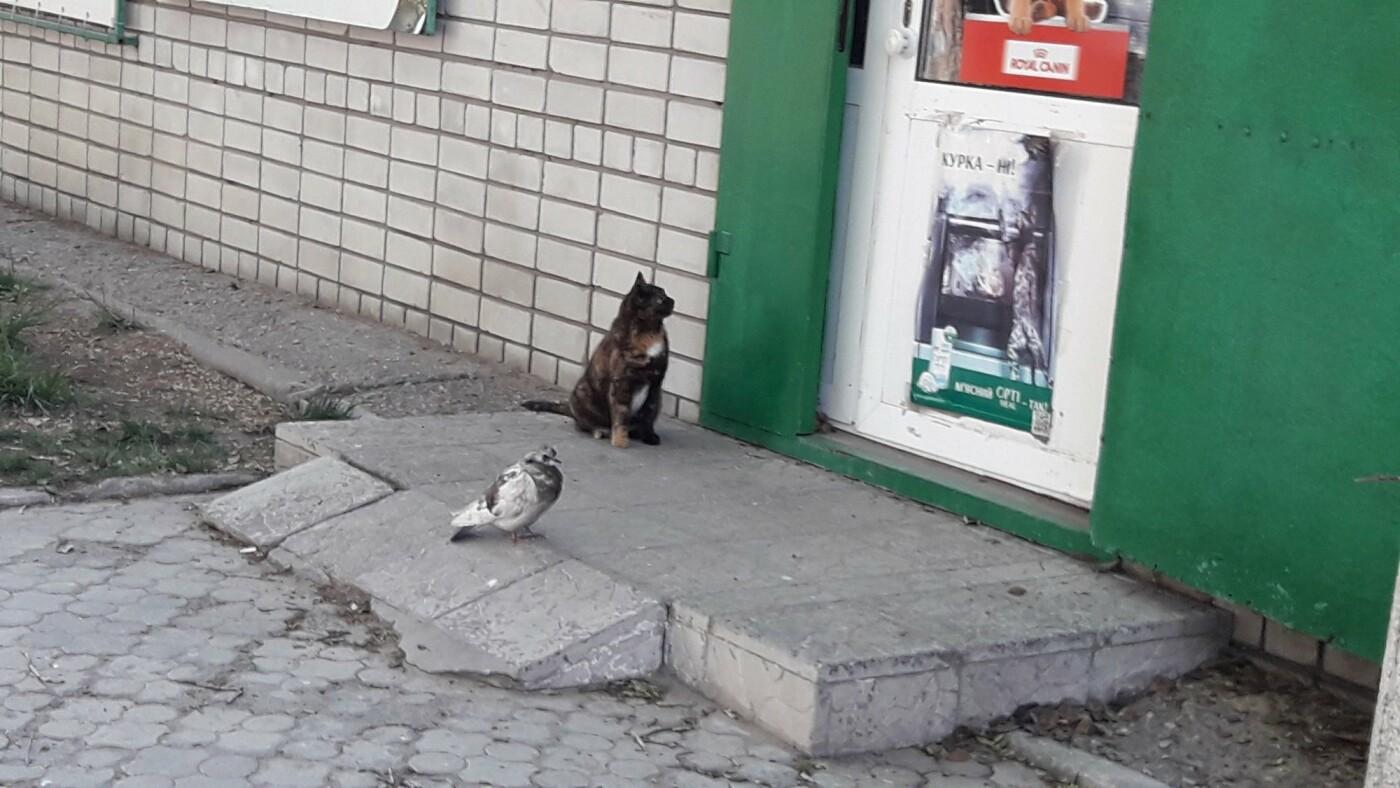Павлоградцы делятся забавными фото в Сети на тему карантина  , фото-1