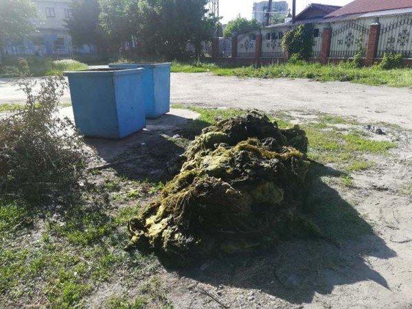 Недалеко от Павлограда Самару чистят от тины и водорослей, фото-1