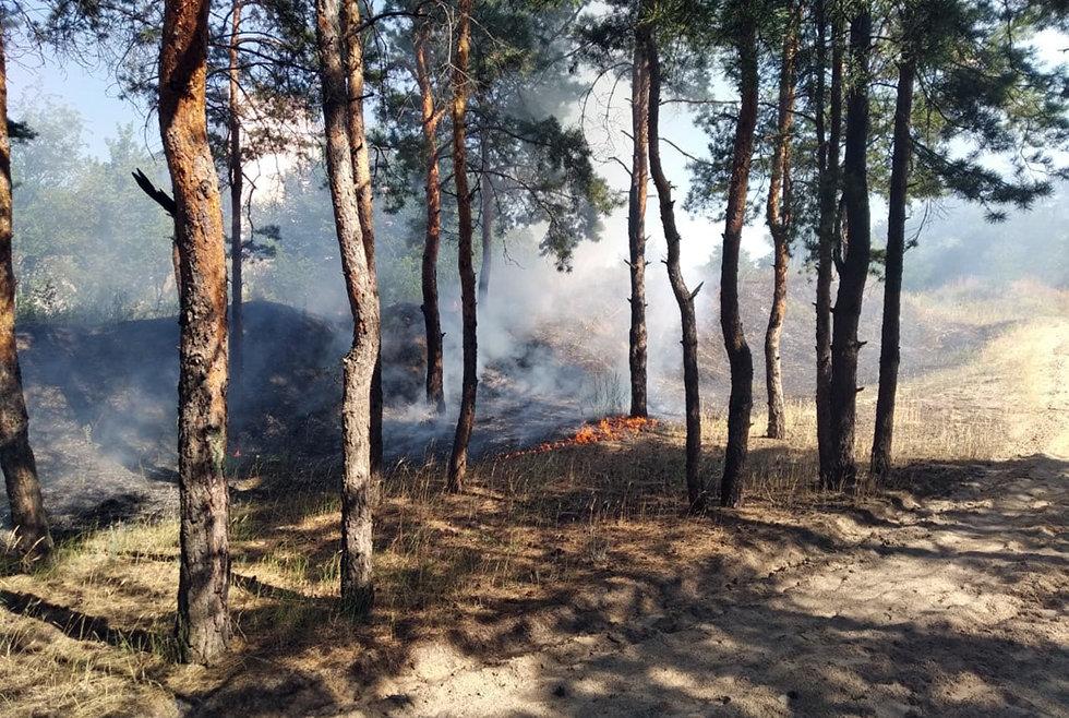 В Павлоградском районе горел лес, фото-2